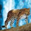 WWF — За последние сорок лет диких животных на Земле стало вдвое меньше