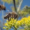В Красноярске рой пчел атаковал ларек с мороженым