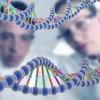 Ученые: выбор друга зависит от генного кода