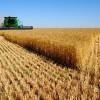 Прогнозирование урожайности и определение качества озимой пшеницы