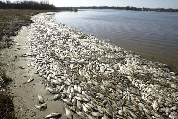 Запах тухлятины по берегу таганрогского залива