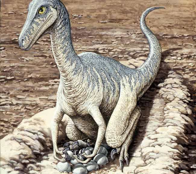 an analysis of the paleontologist research of the process of fossilization