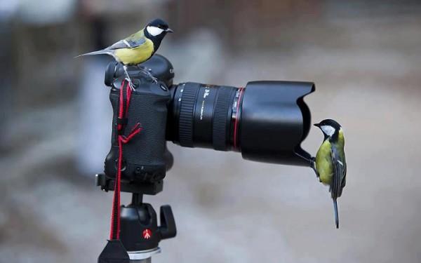 птицы фотоаппарат