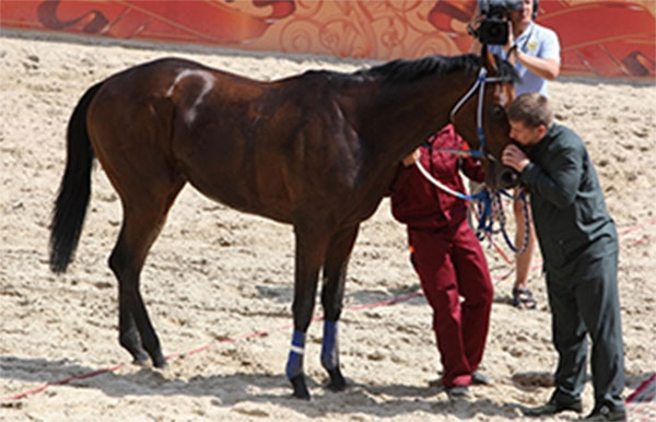 лошадь Кадырова