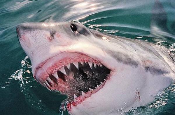 Селфи и снял видео с белой акулой