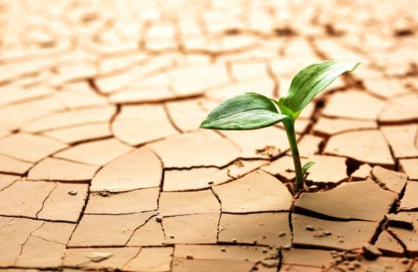 пустыня растение засуха