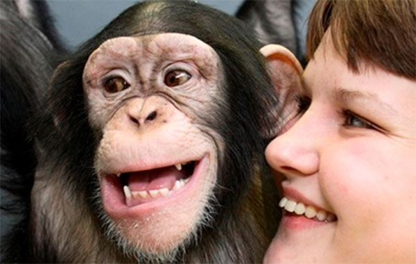 chimpanzee versus humans similarities differences