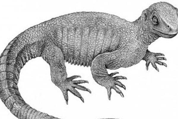 предок черепах Pappochelys