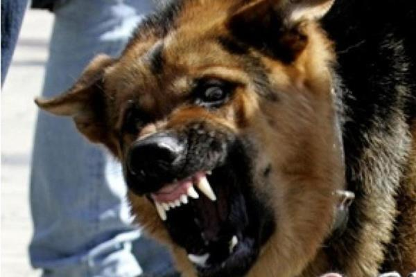 собака загрызла