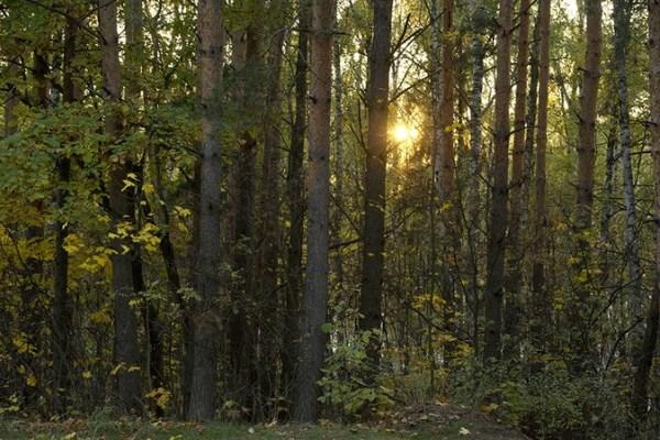 лес Подмосковье