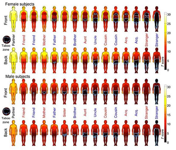 Учёными составлена карта доступности частей тела, к которым можно и нельзя прикасаться
