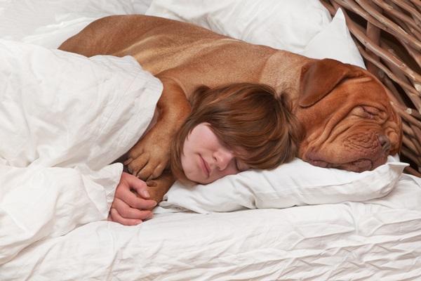 Ученые назвали лучшую альтернативу супругам в кровати