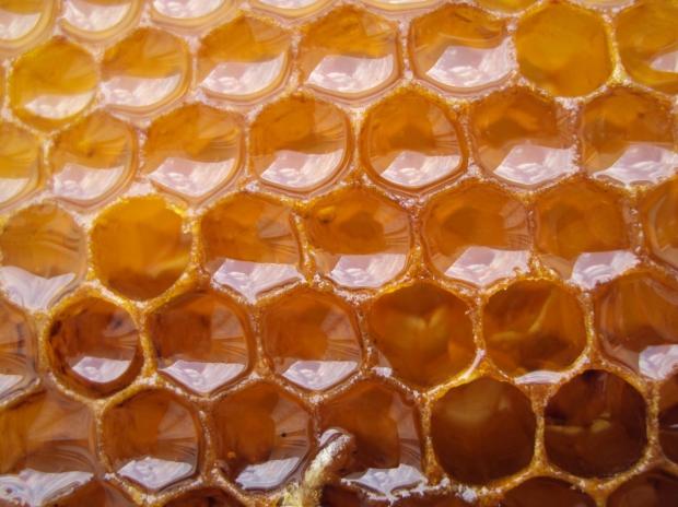 Роскачество обнаружило в русском мёде антибиотики