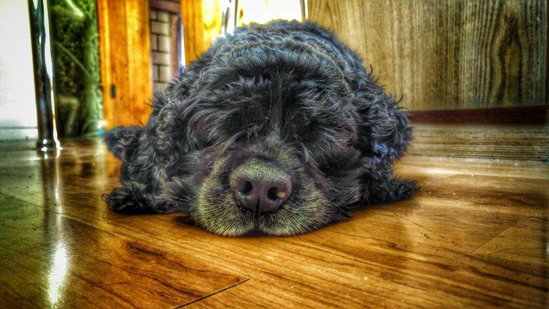 Ученые узнали, что унервозных людей нервные собаки