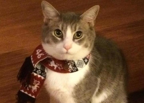 __кот кошка