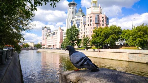 __ Москва, набережная, голубь