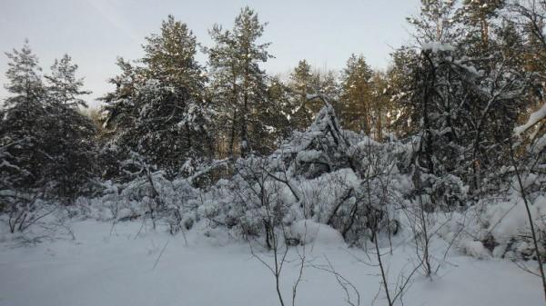 __лес, снег, деревья