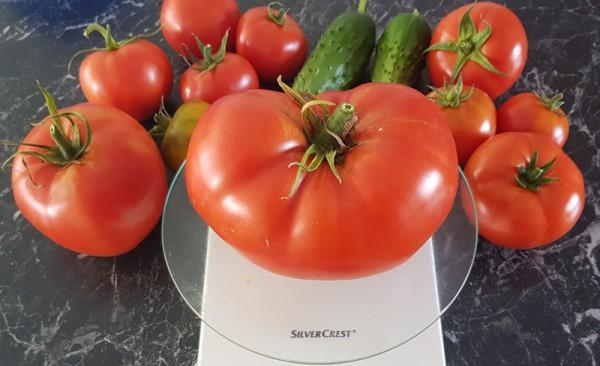 __ помидоры, томаты, огурцы