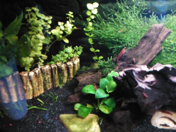__ аквариум