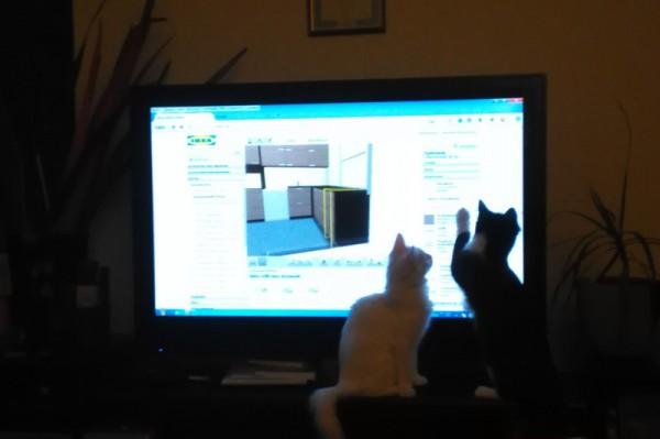 __ кот, кошка, котенок, монитор, телевизор