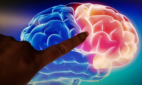 __ мозг, палец