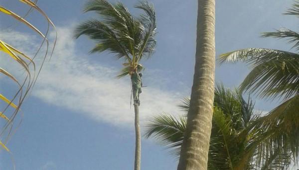 __ пальмы, небо