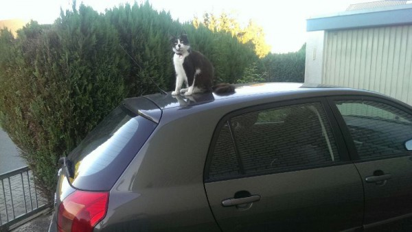 __ кот, кошка, машина, автомобиль