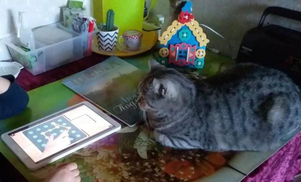 __ кошка, кот, планшет