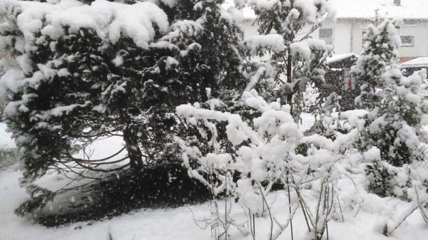 __ снег, зима, кусты, деревья, природа