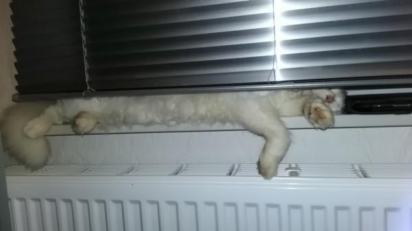 __ кошка, кот, отопление, батарея, жалюзи, окно