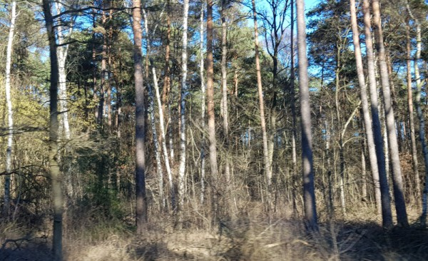 __ хвойный лес, деревья, ель
