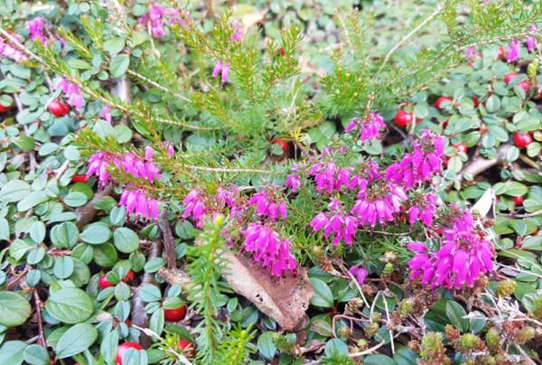 __ цветы, растения