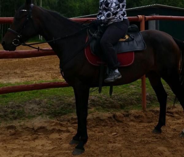 __ лошадь, конь