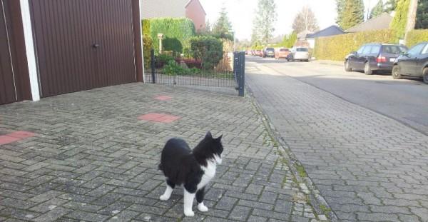 __ дорога, тротуар, кот, кошка