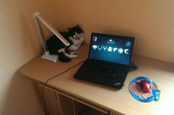 __ кот, кошка, компьютер, ноутбук, лэптоп, стол