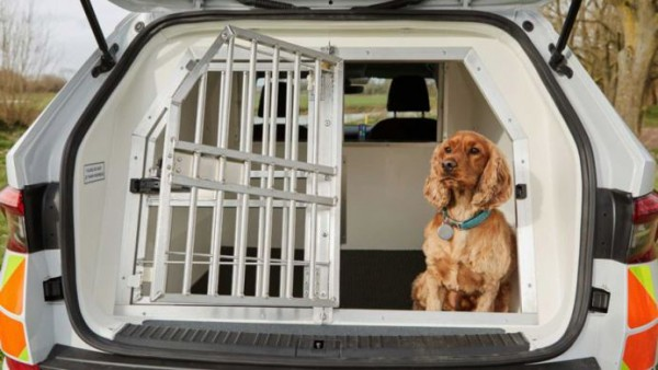 Skoda Kodiaq, перевозка собак